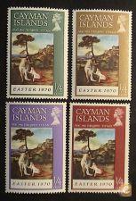 Cayman 253/256 novos**