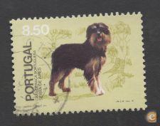 FILA-1981 AF-1511 CÃES RAÇA PORTUGUESA USADO (O)