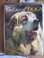 The love of dogs (caes)
