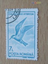 ROMENIA - SCOTT 3648 - AVES
